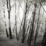 heath forest