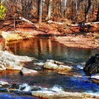 Spring Creek by Lisa Rich