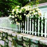 """White Roses On A Picket Fence"" by susansartgallery"