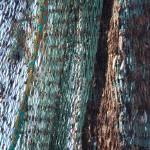 """Fishing Net"" by Groecar"