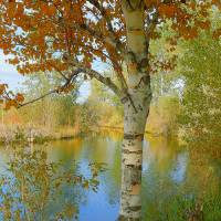 It happened In Autumn Art Prints & Posters by Photography Moments