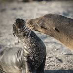 """Sea Lion Greeting"" by SederquistPhotography"