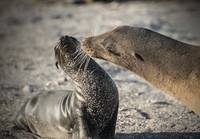 Sea Lion Greeting