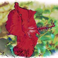 Red Hibiscus Flower Art Prints & Posters by Kirt Tisdale