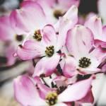 """""""Spring"""" by i2i"""
