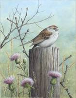 Chipping Sparrow on a Fencepost
