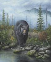 Smoky Mountain Black Bear