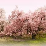 """Magnolia Mist"" by JessicaJenney"