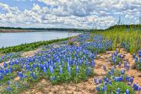 Bluebonnets on the Rivers Edge