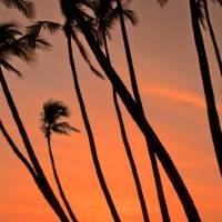 Tilting Palms Art Prints & Posters by Don Schwartz