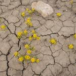 """""""Spring Flowers on Lake Powell - JF19289"""" by FindleyPhoto"""