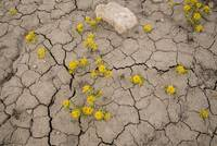 Spring Flowers on Lake Powell - JF19289