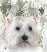 WESTIE ABSTRACT