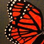 """Velum Butterfly"" by CassieJo"