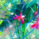 """""""Lakeside Flowers2-16x24"""" by judithschmidt"""
