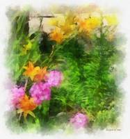 Yellow Lilies and Pink Phlox