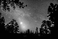 Forest Silhouettes Constellation Astronomy Gazing