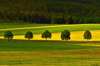 Yellow and green landscape
