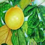 """Passison Fruit"" by joeyartist"