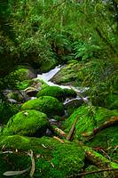 Brilliant Green Moss Covered Rocks in a Stream B02