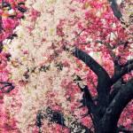 """Asian Cherry Vignette"" by JessicaJenney"