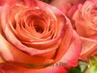 2014 happymothersday roses outside camproductions