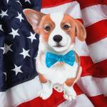 """Corgi America"" by artdeep"