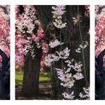 """""""Cherry Blsossom Triptych"""" by JessicaJenney"""