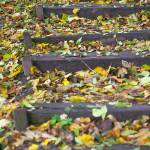 """Autumn colored leafs on outdoor wooden steps"" by emilt"
