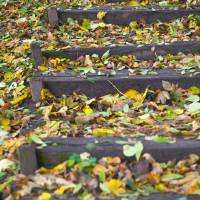 Autumn colored leafs on outdoor wooden steps Art Prints & Posters by Emil Tudorache