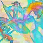 """Tiger Lily Abstract"" by LJdesigns"