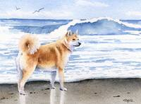 Akita at the Beach
