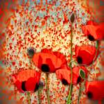 """On Flanders fields"" by valzart"