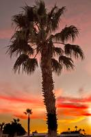 Silhouetted Palm Trees II