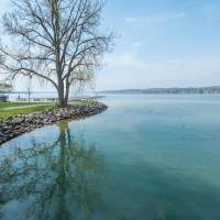 Tree by Lake Canandaigua Art Prints & Posters by D. Brent Walton