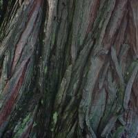 Tree Bark Art Prints & Posters by Philip Shuman