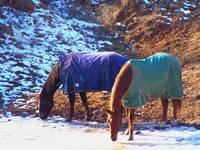 Horses with Winter Coats