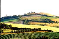 Landscape Near Florence, Italy
