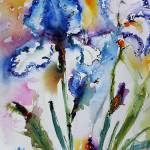 """Blue Bearded Irises Flower Watercolor by Ginette"" by GinetteCallaway"