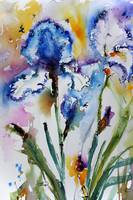 Blue Bearded Irises Flower Watercolor by Ginette