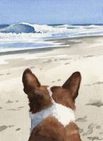 Basenji at the Beach