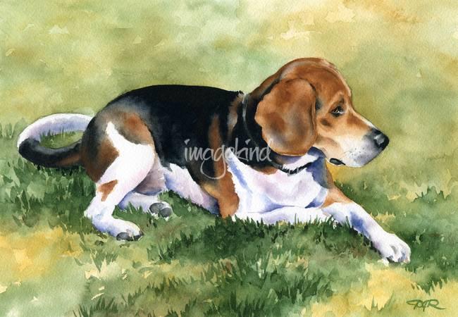 haine pentru beagle