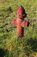 Hydrant in a Field