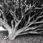 Trees - Topsy Turvy