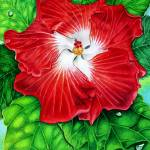 """Hawaiian Hibiscus"" by joeyartist"