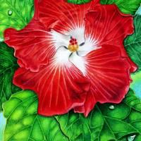 Hawaiian Hibiscus Art Prints & Posters by Joel Carlson