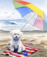 Bichon Frise at the beach