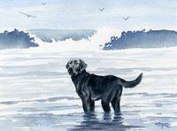 Black Lab at the Beach 2