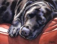Black Lab Sleeping