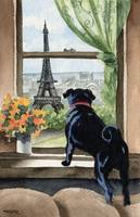 Black Pug in Paris